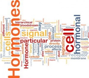 What is a Hormone? - image Hormone-blog-Picture1-300x264 on https://beyond-biology.com